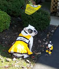 bulldog steelers cheerleader